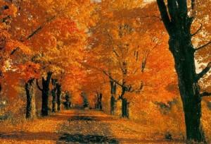 autunno-300x204